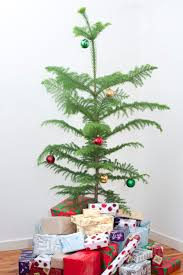Potted Christmas Tree by Photo Of Gift Boxes Under The Christmas Tree Indoors Free