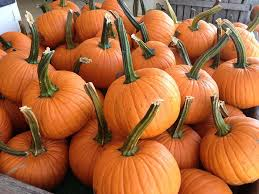 Pumpkin Patch Chesapeake Va by Wood U0027s Orchards Home Facebook