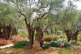 Column The Garden of Gethsemane