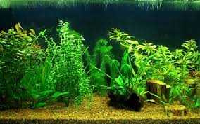 Photo Collection Aquascape 219 Wallpaper F Amp 252R The Green Machine Aquascaping Shop Aquarium Plants Supplies Photo Collection Aquascape 219 Wallpaper F Amp 252r Of The Month October 2009 Little Hill Wallpapers Aquarium Beautify Your Home With Unique Designs Design Layout New Suitable Plants Aquariums Pinterest Pics Truly Inspired Kinds Ornamental Aquascaping Martino Agostini Timelapse Larbre En Mousse Hd Youtube Beauty Of Inside Water Garden Inspirationseekcom Grass Flowers Beautiful Background