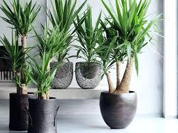 plante de bureau plantes bureau des plantes pour le bureau plante pour bureau sans