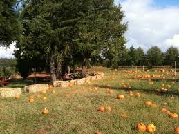 Apple Hill Pumpkin Patches Ca by 50 Best Apple Hill Images On Pinterest Boa Vista Orchards And