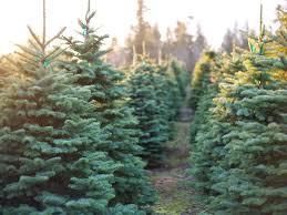 Griswold Christmas Tree Farm by 10 Christmas Tree Farms Where You Can Actually Get Married