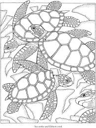 Welcome To Dover Publications Creative Haven SeaScapes Coloring Book Turtle PagesOcean