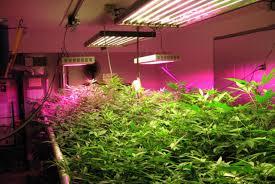 lighting impressive grow fluorescent lights 117 fluorescent grow