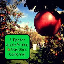 Pumpkin Patch In Yucaipa by 5 Tips For Apple Picking In Oak Glen California Socal Field Trips