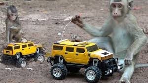 RC Truck Vs Baby Monkeys | Cute Baby Monkey Happy To Play RC Truck ... Rare Pg Tips Brooke Bond Monkey Chimp Lledo Milk Float Truck Van Gas Monkey Garage I Love This Dream Toys Pinterest Purple Mud Truck Catches Some Serious Nitrous Fire In 20 Diesel Burnouts At Live Youtube Graphics For Mudd Renovations Betacuts Custom Vinyl On Twitter Whos Going To Take These Keys From Lone Star Thrdown 2017 Bodyguard Truckin Tuesday Monster Jam Hot Is Our Conut Demand Making Slaves Of Monkeys Inhabitat Hungry Tampa Bay Food Trucks 124 Scale Unboxing Review Look It Sit My