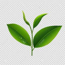 Tea Leaves In Transparent Background Gradient Mesh Vector Illustration Stock