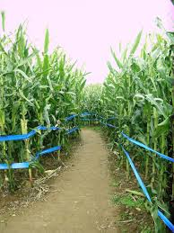 Best Pumpkin Picking In South Jersey by New Jersey Corn Mazes And Pumpkin Patches Jersey Kids