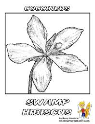 Swamp Hibiscus Flower Coloring Picture At YesColoring