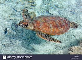 polynesia leeward archipelago bora bora island le