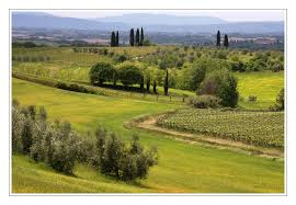 Wallpaper Trees Landscape Italy Hill Grass Field Farm Vines Tuscany Structure Plateau Paysage Golf Course Estate Grassland Pasture