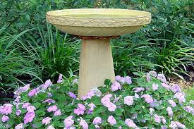 Good Plants For Bathrooms Nz by Bird Bath Placement Best Tips