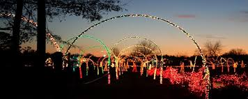 lights safari at hollywild our upstate sc