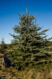 Pinery Christmas Trees by All I Want For Christmas Hiking Over The Holidays Gone Camping