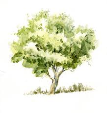 Reference Watercolor Trees