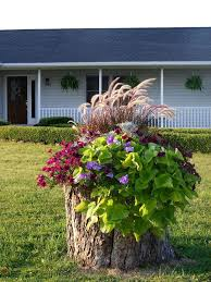 best 25 tree stumps ideas on pinterest tree stump furniture