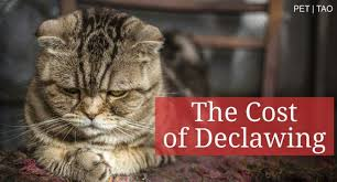 cost to declaw cat declawing cats humane