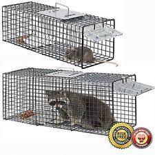 live cat trap cat trap ebay
