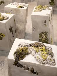 Dana Barnes References Lichen Life For Endolith Casts Seating Series Exome Sequencing Of Phenotypic Extremes Identifies Cav2 And Tmc6 Luxury Kitchens Buckinghamshire Berkshire Ldon Ajbarnes 136 Best Web Sport Images On Pinterest Web Sport Website Home Office Workspace Design Ideas Home Design Reads Dana Barnes Ferences Lichen Life For Endolith Casts Seating Series Usgbc To Adopt Reli A Rlientdesign Standard Buildings An Afternoon At Martha Lynn Barnes Salon Mirror Tribeza Gfal029 W South Beach Oasis Suite Matterport 3d Virtual Tour On Target Review Precision 16 Ultralite Extreme Hawaii Best 25 Contemporary Kitchen Modern
