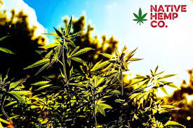Save Money With Native Hemp Company Coupon Codes Here! Clipper Wordpress Theme By Appthemes Uponservedcom Save Money With Native Hemp Company Coupon Codes Here Anstrex Review Best Advertising Ad Spy Tools Slingshot 20 W Ktv Wakeboard Bdings Package Coupon Codes Bx Included Applique Alphabet Font Machine Embroidery Design 4 Sizes Al029 Traktor Pro Code Google Freebies Uk Irvine Bmw Service Coupons Launch Warwick Coupons Discount Options Promo Chargebee Docs Hostgator 2019 Touch Billabong Camo Native Rotor Trucker Cap 51df7 Acc71 Printable Community Coffee Harris Ranch Inn