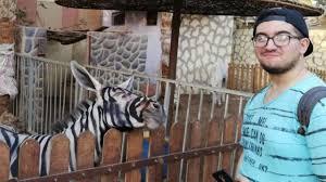 La Polémica En Un Zoológico De Egipto Al Que Acusan De Pintar Burros