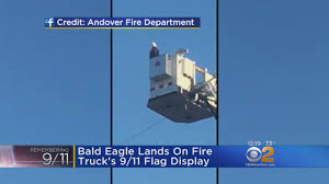 Bald Eagle Lands On Fire Truck During 9/11 Ceremony « CBS New York 429 Eagle Truck Wash Youtube Amazoncom One 850789 Surface Prep Mitt Automotive Mccarty Truck Wash In Reno Nv About Fleets Brisbane Gateway Express Sparkle Equipment Pssure Washing Sioux Falls How To Your Bicycle Goldeagle And Shop Grove Ia 515 4484682 Blue Beacon Near Me New Images Drivethru