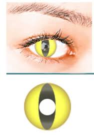 cat contacts yellow cat contact lens pair yc 24 99 colored