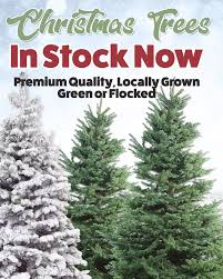 Oregon Has Been The Number One State For Production And Shipping Of Christmas Trees Many Years 2017 Appears To Be No Exception
