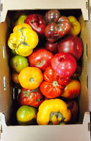 Sauvies Island Pumpkin Patch Groupon by Come Get Your 2 Organic Heirloom Canning Tomato September 2017