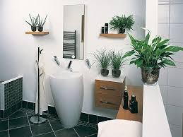 badezimmer badezimmer pflanzen badezimmerpflanzen