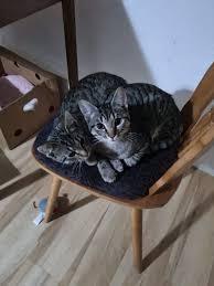 katzen abzugeben in bad arolsen katzen kostenlose