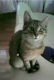 Happy Birthday Cat GIF