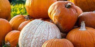 Southern Ohio Pumpkin Patches by 30 Perfect Pumpkin Patches In Indiana You Need To Know About