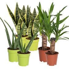 grünpflanzen schlafzimmer mix für sonne bis halbschatten 6er set