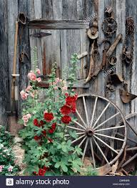 PINK RED HOLLYHOCKS FLOWERS BY SIDE OLD WEATHERED BARN DOOR WAGON ... The Flower Barn Free Images Tree Branch Wood Leaf Flower Barn Food Home Spring Wedding Flowers By Olga Winter Blue Twig Canada Virginia Local Dinner Healthfully Ever After 3 Livermore Falls Advtiser Tritown Garden Clubs Cherry Hill Pennock Floral My Delivers Joy Through Flowers South Platte
