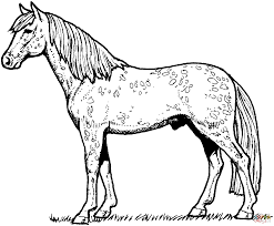 Horse Printable Coloring Pages Horses Free Of Animals