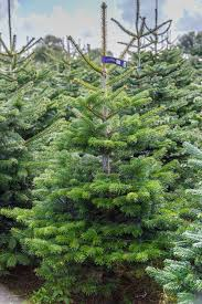 Fake Or Real Trees Your Guide To Buying The Best Christmas Tree
