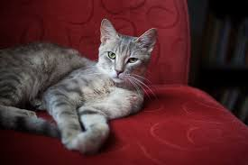 cat sofa my cat s scratching furniture how can i keep claws the