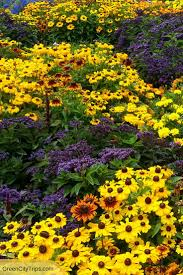 Murray Farms Bakersfield Pumpkin Patch by 683 Best Gardens Of Eden Images On Pinterest Gardens Beautiful
