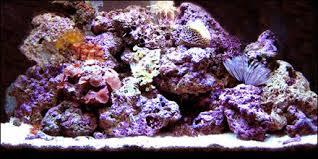 large aquarium rocks for sale reef rock for sale