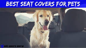 5 Best Seat Covers For Dog Hair: Product Reviews 2018 - Pet Lovers World Leatherlite Series Leather Custom Fit Seat Covers Fia Inc Smittybilt Gear Coves The Leader In Universal Dodge Truck By Clazzio Upholstery Options For 731987 Chevy Trucks Hot Rod Network 2017 Ram Amazoncom Cushion Winter Car Pad Cushion Electric Heated Durafit C1127v7 Trupickup Silverado Duraplus Carstruckssuvs Made America Free Car Seat Pets Reviews Chartt Traditional Covercraft