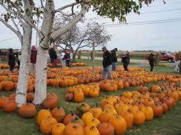 Best Pumpkin Patches Near Milwaukee by All In A Day U0027s Fun Swan U0027s Pumpkin Farm Urban Milwaukee