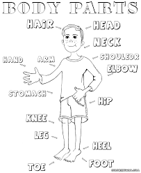 Body Parts Coloring Pages In Page For