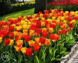 bulk flower bulbs flowers ideas for review