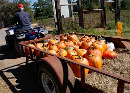 Kent Island Pumpkin Patch by Local Alabama Pick Your Own Pumpkin Patches