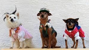 Old Westbury Gardens Dog Halloween by Best Pet Friendly Halloween Events In Orange County Cbs Los Angeles