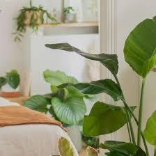 die schönsten pflanzen für dein wohnzimmer nachhaltige