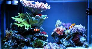 Nano Tank - 29 Gallon | Nano Tanks | Pinterest | Aquariums, Reef ... 75 Gallon Tank Aquascape Ideas Please Reef Central Online Community Minimalist Aquascaping Page 3 2reef Saltwater And How To A Aquarium Youtube Tank Rockscape To Drill Cement Your Live Rock Gmacreef Columns In A Saltwater Callorecom Pieter Van Suijlekoms Revisited Is There Science Live Rock Sanctuary The Why I Involuntarily Redid My Mr 7