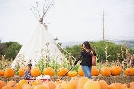 Half Moon Bay Pumpkin Patches 2015 by Happy Halloween From Farmer John U0027s Pumpkin Patch Http Www
